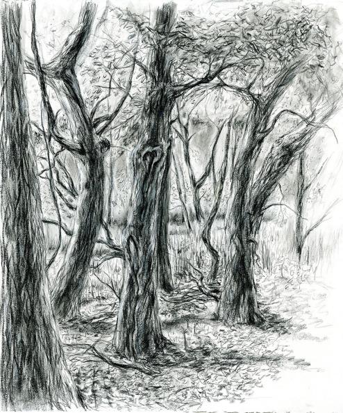Gooseberry Wood