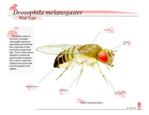 Excerpt from Drosophila melanogaster: Determining the Difference (page 1)