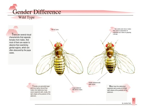Excerpt from Drosophila melanogaster: Determining the Difference (page 2)
